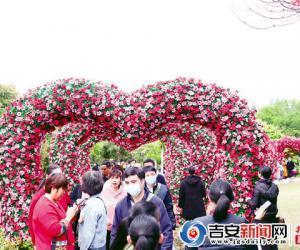 第十二届井冈山杜鹃花节开幕 王少玄罗文江刘连根出席