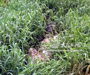 峡江县一草丛里惊现三具已腐烂的鳄鱼尸体(图)