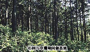 新干县自然资源