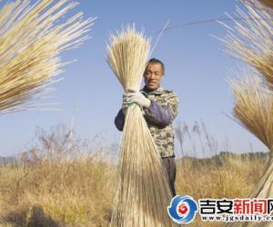 安福县钱山乡宏发竹制品厂工人在晒竹条