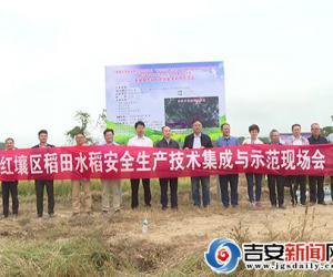 镉污染红壤区稻田如何安全生产?降镉示范来了!